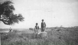 altonasheep1947.jpg